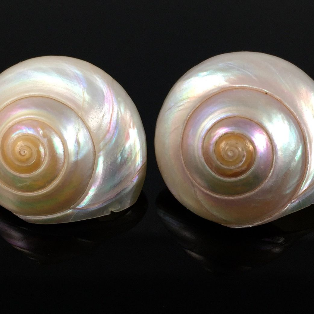Pearly Turban Shell Earrings Vintage Sixties Iridescent Mother Of Pearl